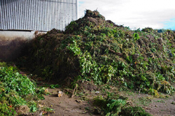 Food in Yard Waste Classification Information