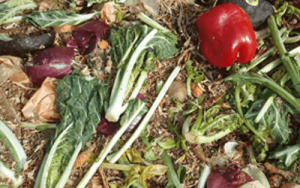 Food waste composted